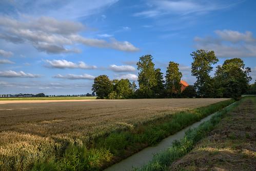 Wheat field, shadows