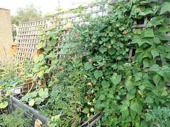 My Garden 18-07-26 (15)