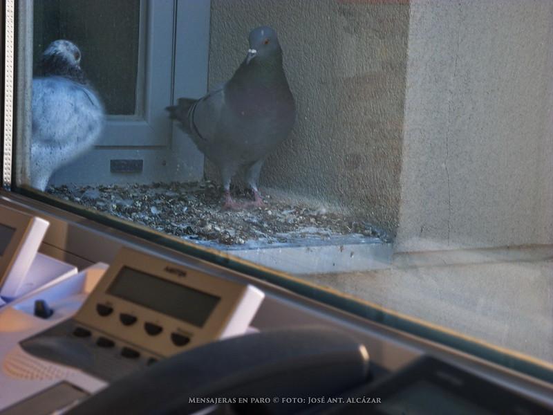 Un par de palomas vistas a través de una ventana, con unos teléfonos en primer plano