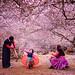 A happy family under a  plum blossom garden