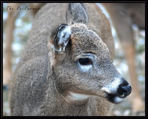 2018-11-24.deer