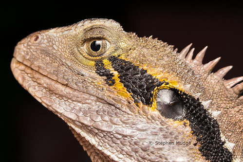 The Face of a Dragon | by mudge.stephen