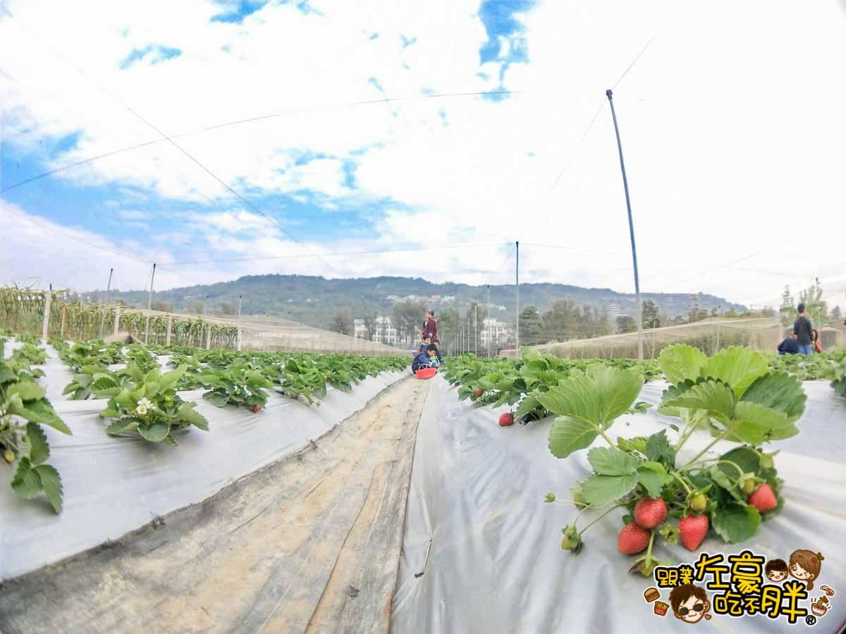 大岡山觀光草莓園-11