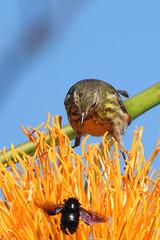 Warbler & Bug