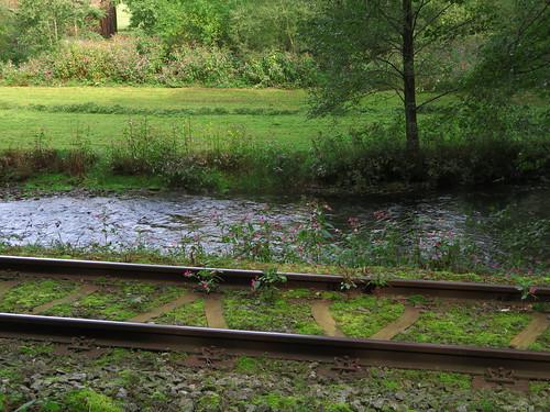 20170928 01 388 ostbay Bach Eisenbahngleise Wiese
