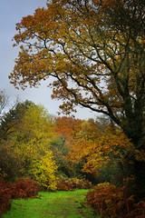 Holmwood Common-1
