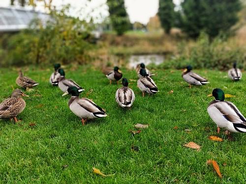 Public park Thurles.