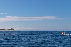 Boat tour with dolphins, Kauai Hawaii