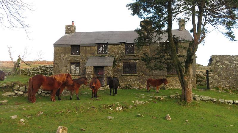 Ponies at Ditsworthy Warren House