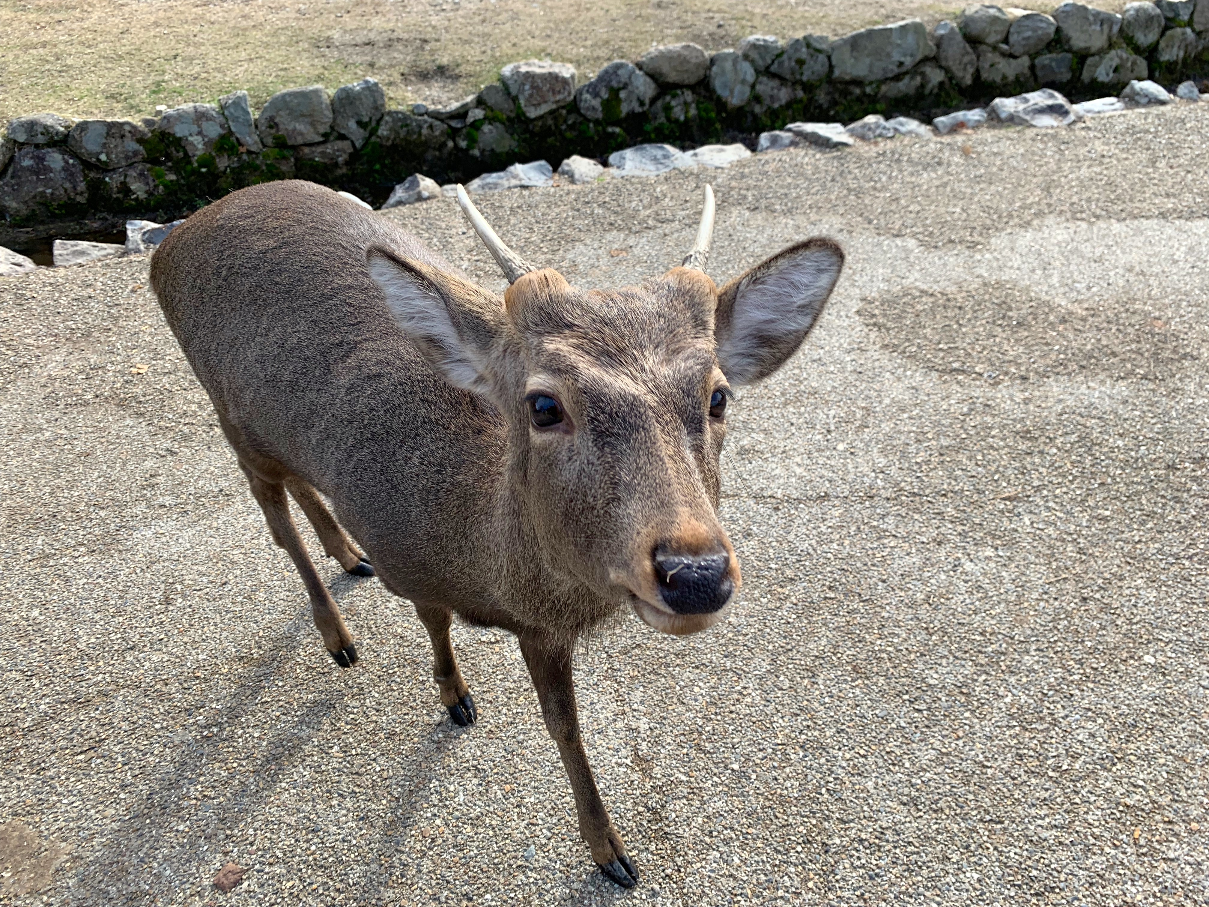 Nara, Japan 2018 300