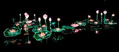 France - Gaillac - festival des lanternes