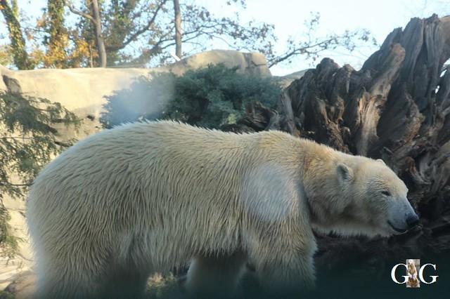 Besuch Zoo Rostock 03.11.201829