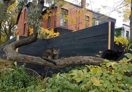 Urban Jungle Cats