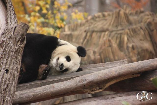 Besuch Zoo und Tierpark Berlin 24.11.201823