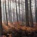 Return to Dowdell's Wood