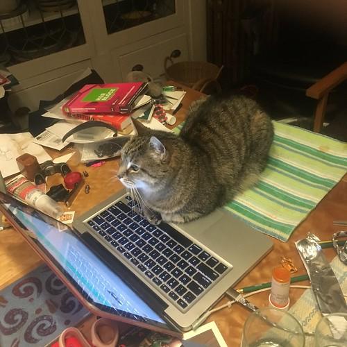 Mavis uses the computer/
