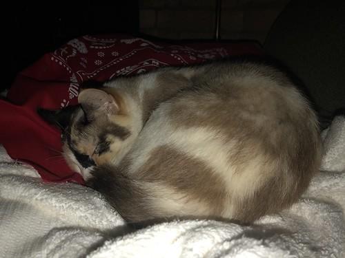 Sleepy Tinny
