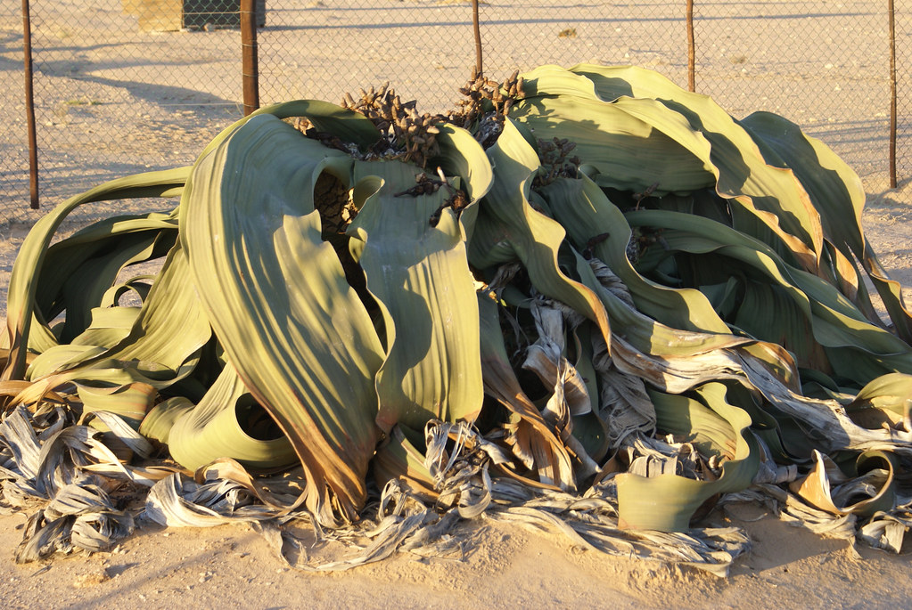 Namibië. VVT