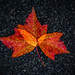 fall leaves- in-camera multiple exposure, Vancouver. by gks18