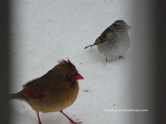 Birds in the Snow at FromMyCarolinaHome.com