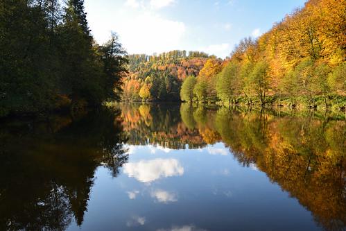 L'étang du Donnenbach