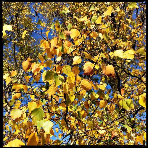 autumn 🍁🍄🍂