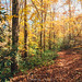 Fall at Warwoman Dell by J. Parker Natural Florida Photographer