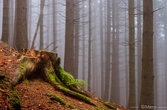 Foret d'automne - Photo of Saulxures