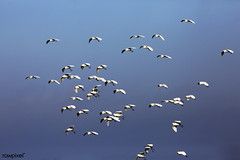 A flock of egrets soars above. Original from NASA. Digitally enhanced by rawpixel.