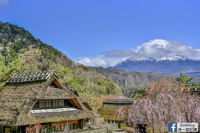 西湖療癒之鄉根場櫻花-32