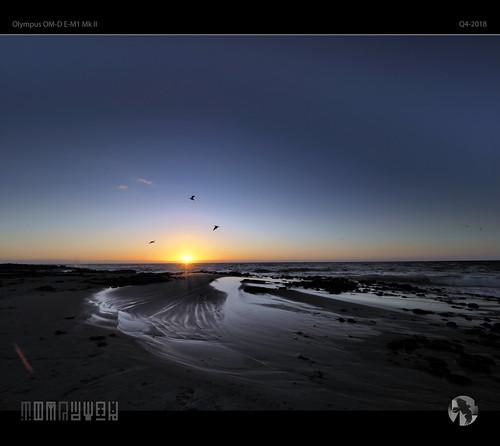sunset birds seagulls gulls dgulls dancinggulls aravenimage tomraven sky rocks sea ocean beach coast coastal q42018 olympus em1mk2
