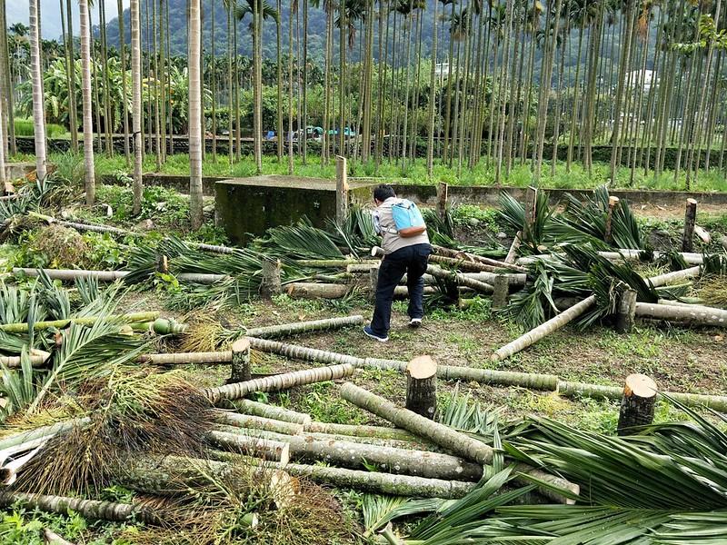 2015年,陽光社會福利基金會為口腔癌病友投入推動檳榔園廢園轉作油茶,目前已累積有超過50公頃的成績。(圖片提供/陽光社會福利基金會)