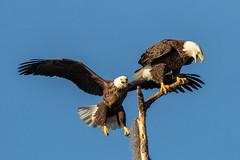 Sarasota Wildlife Photos