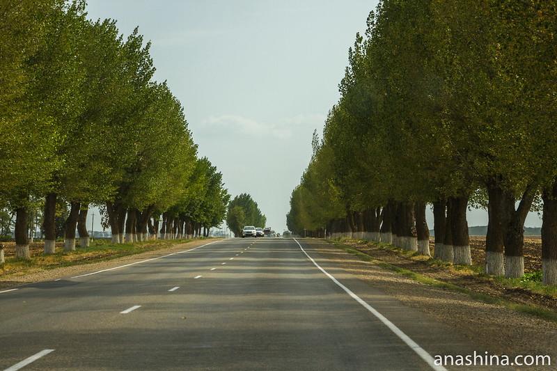 Деревья вдоль дороги