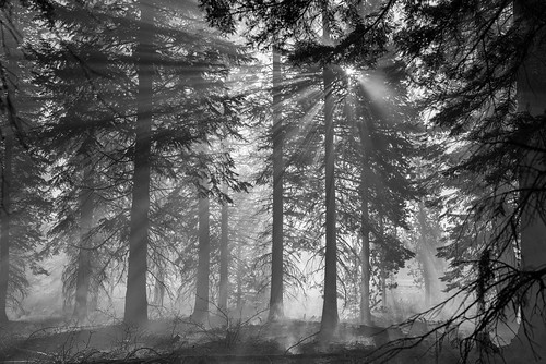 oregon dawn sunrise deschutes national forest controlled burn monochrome bw fire wildland