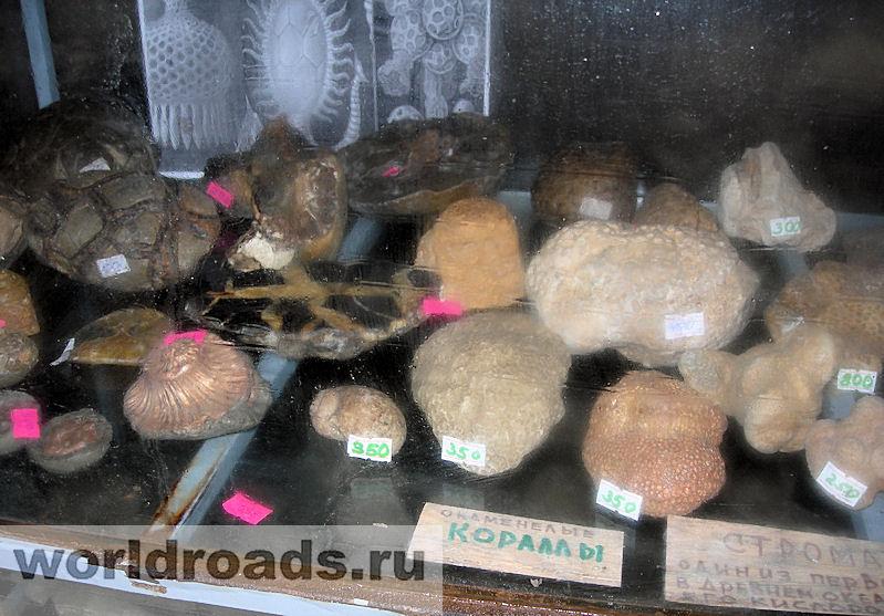 Сувениры из окаменелостей и минералов
