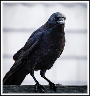 Day Of The Crow