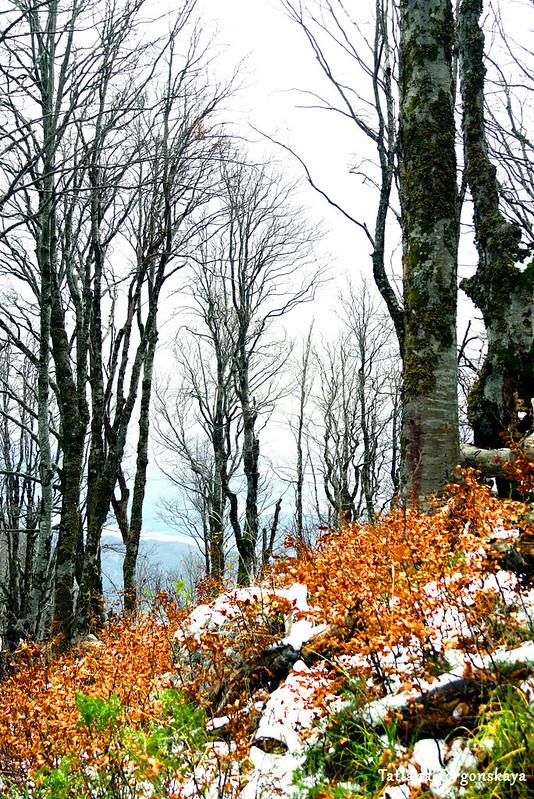 Буковый лес на хребте