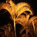 Palmiers illuminés