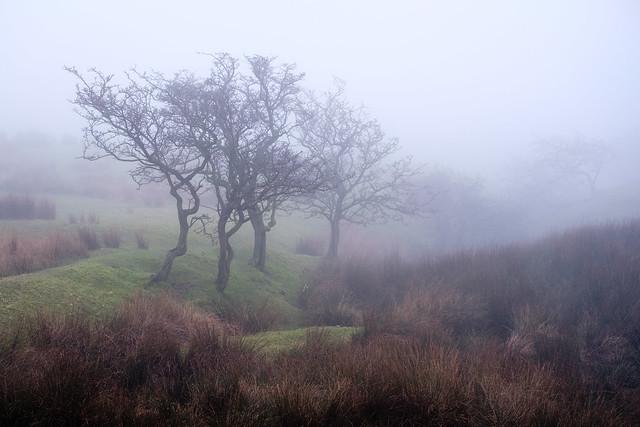 Rivington Moor