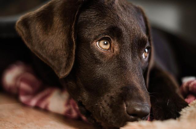 食事を催促せずに褒められる犬