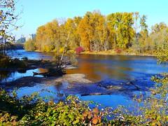 Willamette River flowing toward Skinner Butte in Eugene, Oregon