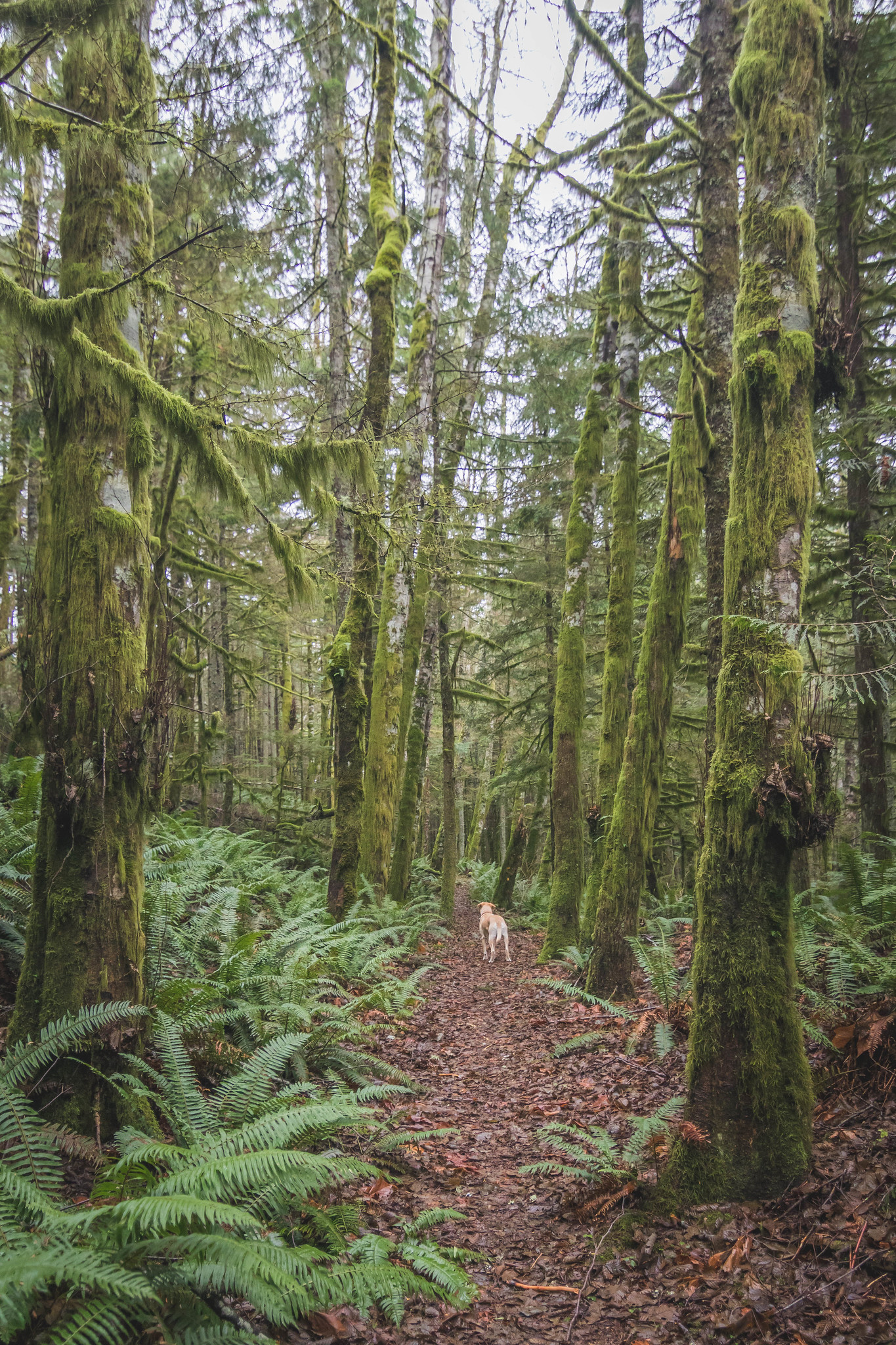 West Tiger Railroad Grade Trail