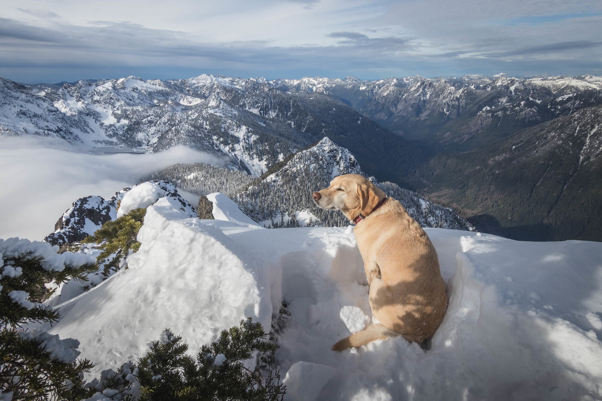 Summit dogs on Snoqualmie Mountain