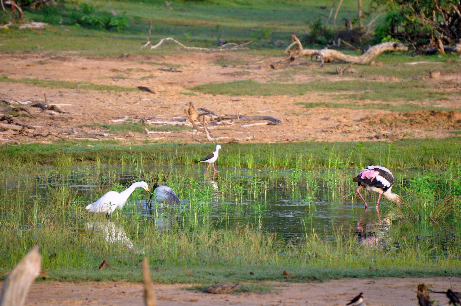 visitar el Parque Nacional de Yala en Sri Lanka