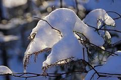 snow closeup 1