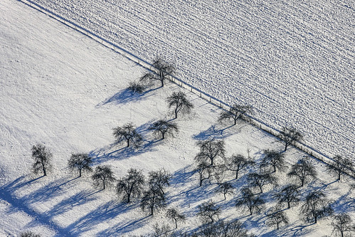 Snow-Covered Fruit Meadow