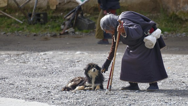 Feeding the dog, Tibet 2018
