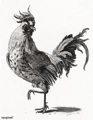 A Cock by Johan Teyler (1648-1709). Original from The Rijksmuseum. Digitally enhanced by rawpixel.