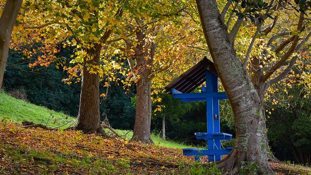 Autumn colour in Lismore, Nikon D5500, Sigma 70-300mm F4-5.6 DG OS